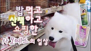 사모예드 산책하고 밥 먹고 펫츠마트 쇼핑 다녀온 일상 브이로그 ㅣSamoyed shopping at Petsmart Daily Vlog