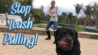 Simple method to help pulling on leash