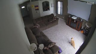 Idaho Earthquake: Raw Video From Viewers Of Quake Also Felt In Six Other States