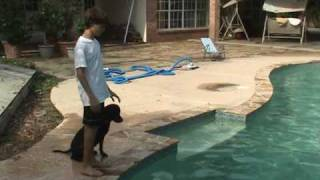 Lab Dives To Bottom Of Pool - Labrador Retriever Training For Duck Hunting