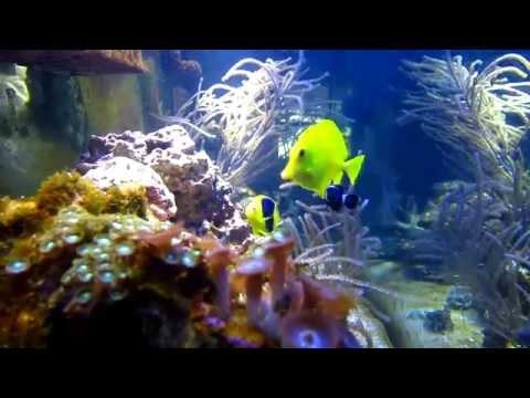 One week saltwater fish quarantine method