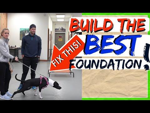 How to Train ANY DOG the basics- Dog Training foundation