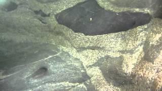 長野県虻川渓谷で水中動画を撮ってみた camera:PanasonicDMC-FT2.