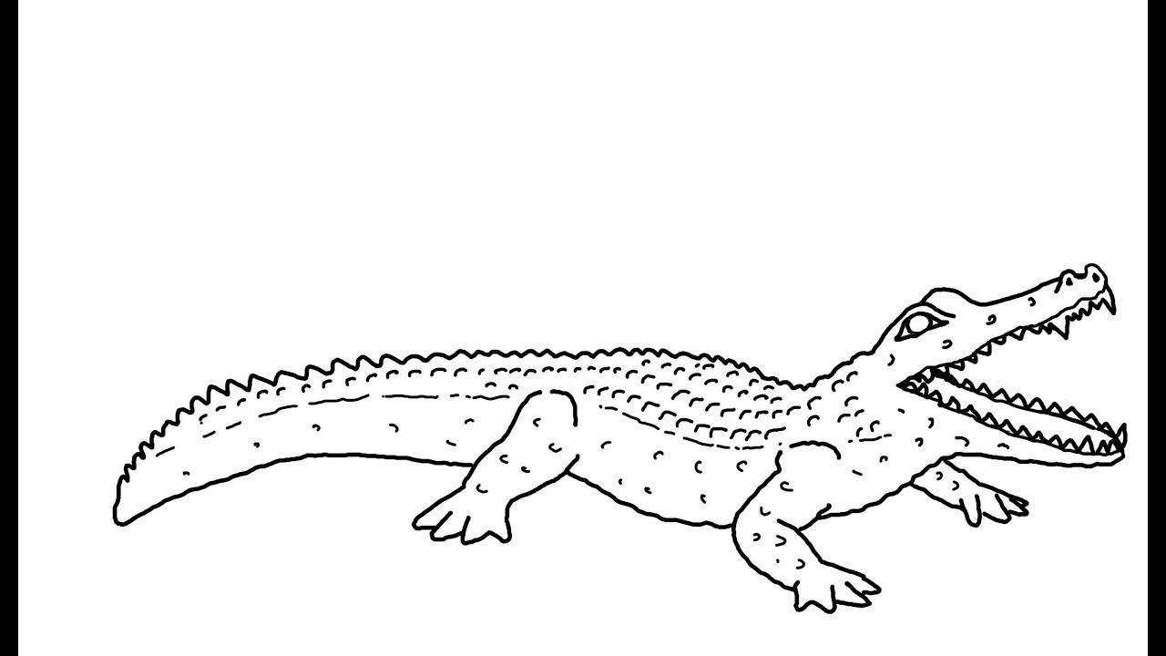 Крокодил рисунок для раскрашивания