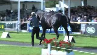 Burghley Horse Trials 2008: Horses behaving badly