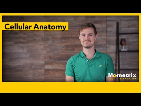Introduction to Cellular Biology