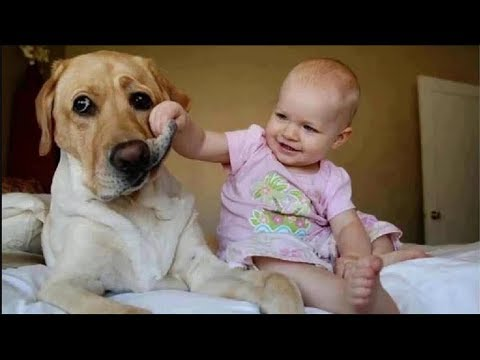 FUNNY BABY and Cute Dog - Best Funny Video Compilation