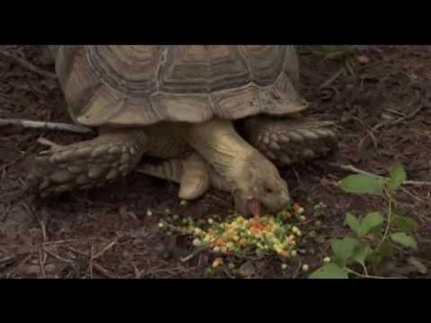 Borat - Tortoise