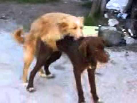Mi compañera y su novio se pasan el día follando como perros