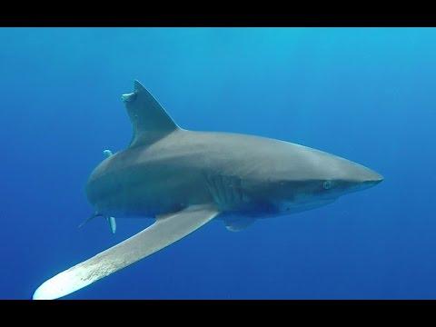 "Dive in Egypt ""Hurghada"" - Aldebaran - Elphinston - Zabargad - Rocky island - Deadalus"