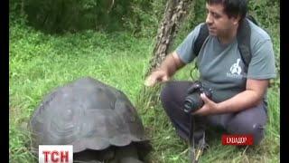 Новий вид гігантських сухопутних черепах відкрили на острові Санта-Круз