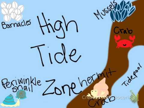 Intertidal Zone 2015
