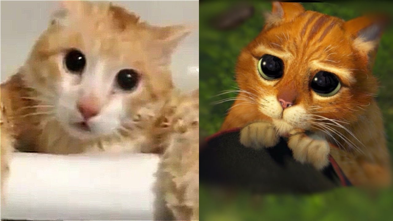real shrek cute cat eyes scene youtube