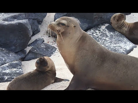 Celebrity Xpedition - Galapagos Islands with Quito pre and post cruise