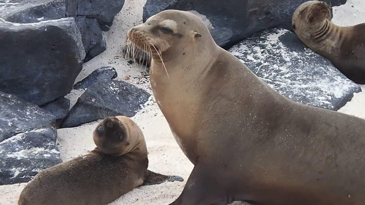 Celebrity Xpedition Galapagos Cruise - Review of Galapagos ...