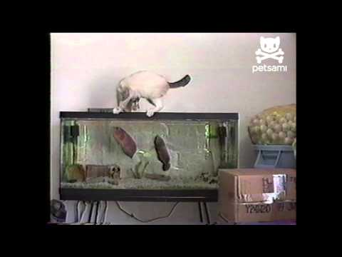 Curious cat gets attacked by fish