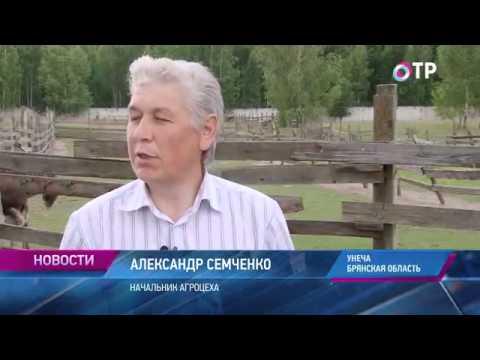 Малые города России: Унеча - здесь выращивают 85% российского женьшеневого корня