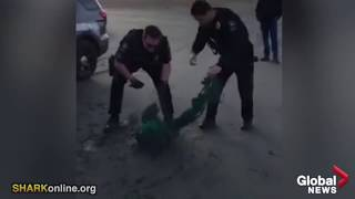 Two Good Cops Rescue a Seal