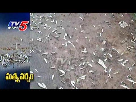 Fish Rain In Nuziveedu | Fishes Fall From The Sky | TV5 News
