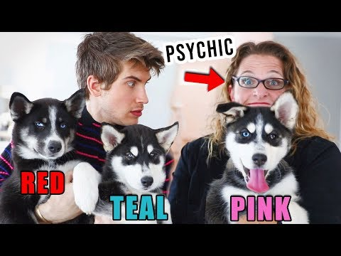 Psychic Decides Which Puppy We Keep!