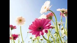 Download Hindi Video Songs - The song of a flower....Hoovondu Balibandu...