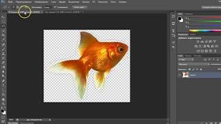 Как вырезать объект в Фотошопе с помощью инструмента Лассо