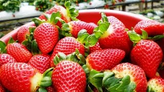 Kanthalloor farm - veritable land of fruits and vegetables