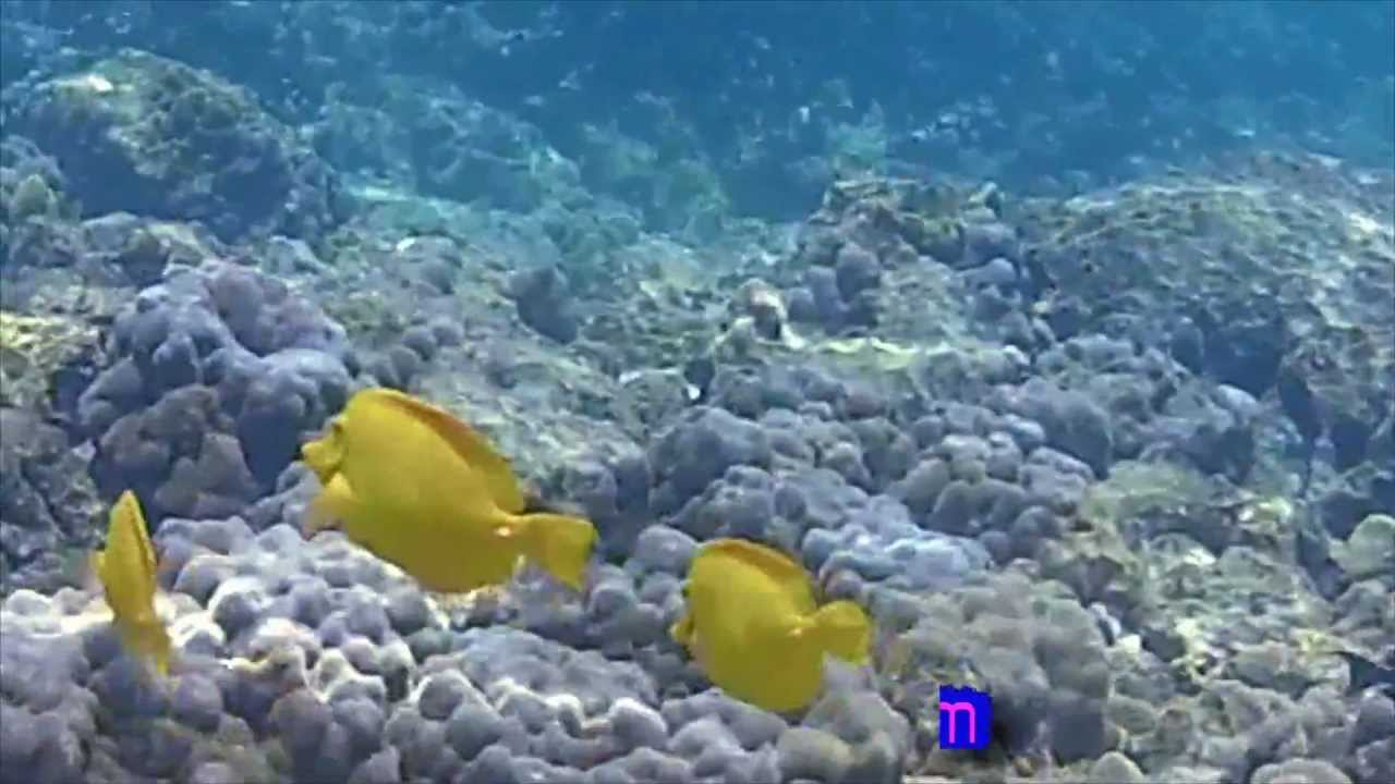 Kahalu U Beach Park Hawaii Snorkel Menehune Reef Vol 2