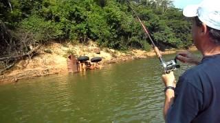 PESCARIA RIO CANDEIAS - RONDÔNIA -  IMPOSSÍVEL TIRAR D