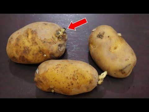 馬鈴薯發芽到底能吃嗎?專家來告訴你真相!99%的人竟都不知道! - YouTube