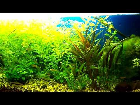 Укорачиваем, сажаем и убираем растения в аквариуме