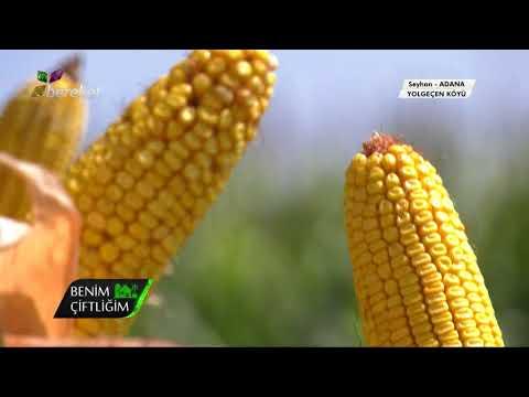 DEKALB Adana DEKALB Teknoloji Merkezi Benim Çiftliğim Programı