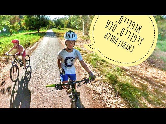 המלצת טיול אופניים קל לכל המשפחה באגמון החולה קקל