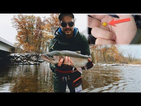 Steelhead - Got Em On The Yellow BEAD EGG Fly Fishing Elk & Walnut Creek