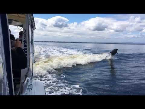 Dolphin Island Adventure 08102017