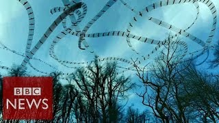 Stunning flight patterns revealed by video effect - Click - BBC News