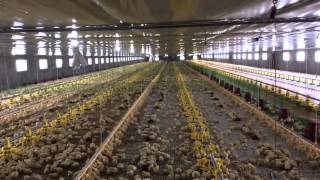 Philwide Broiler Farm, Goldenbarn Project, San Miguel Bulacan, Philippines