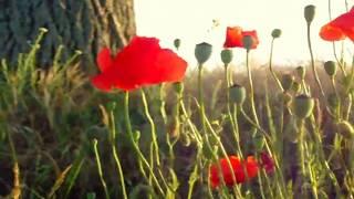 WANDERLUST, MARK KNOPFLER, Fields Flowers
