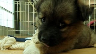 Cutest German Shepherd Mix | The Daily Puppy