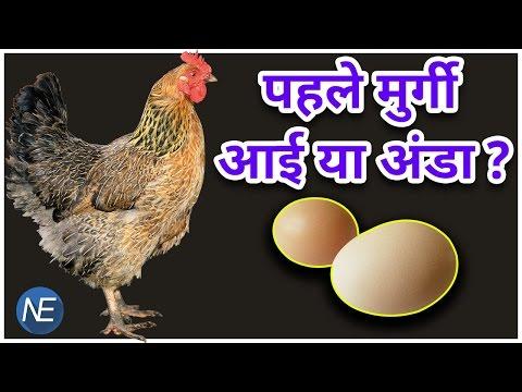 मुर्गी और Eggs पर अब नहीं होगी Debate, मिला जवाब कि कौन आया पहले