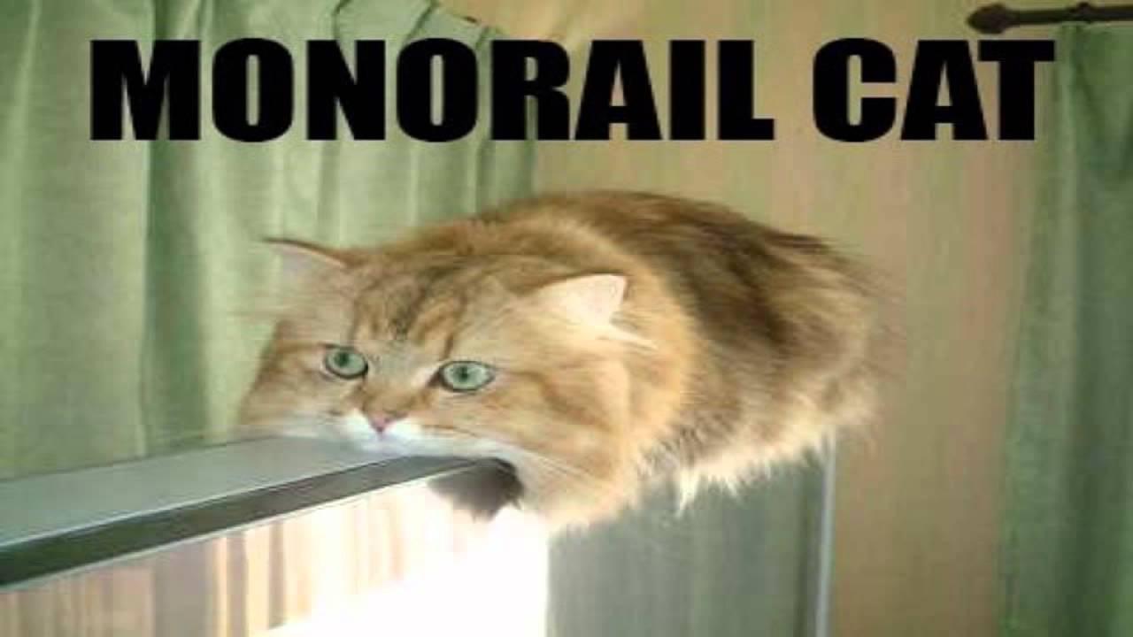 Free Cat Memes