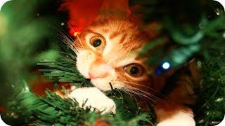 Смешные Кошки 2015 6 Веселая Видео Подборка Смешные Животные 2015 2016