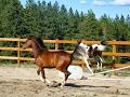 Foal Watch