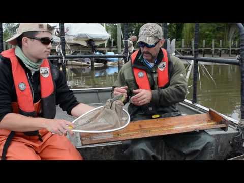 Shocking Truth - The Northern Snakehead