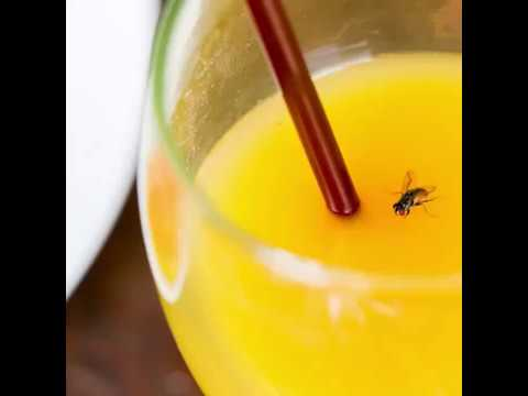 Why a female fly will ruin your drink, but a male is fine
