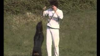 Породы собак  Ротвейлер 1