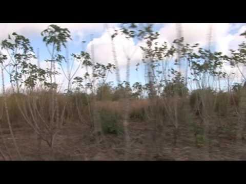Ed Enviro mining Mozambique