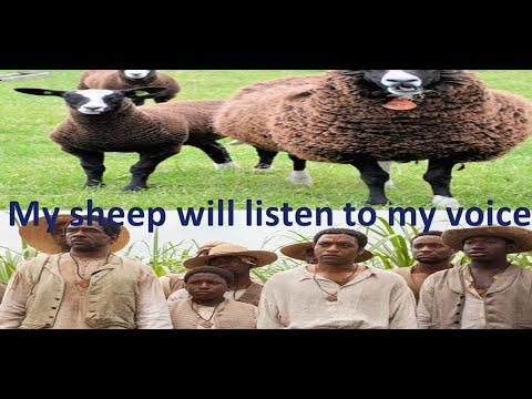 My sheep will listen to my voice