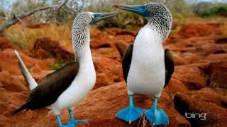 екзотические птицы