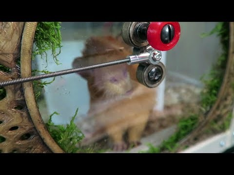 Hobbit Hole 3D Printed Latching Guinea Pig Cage Doors